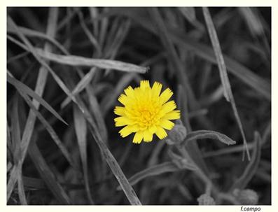 20120308102732-flor-0.jpg