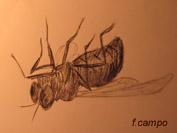20100411120051-mosca.jpg