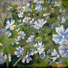 20111112144553-malva.jpg